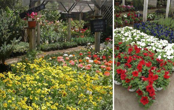 Vivero Jardín California